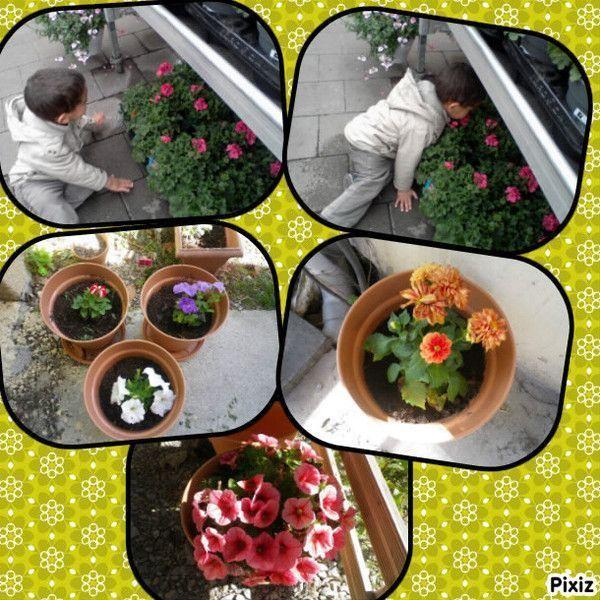 Plantation des fleurs centerblog for Plantation de fleurs